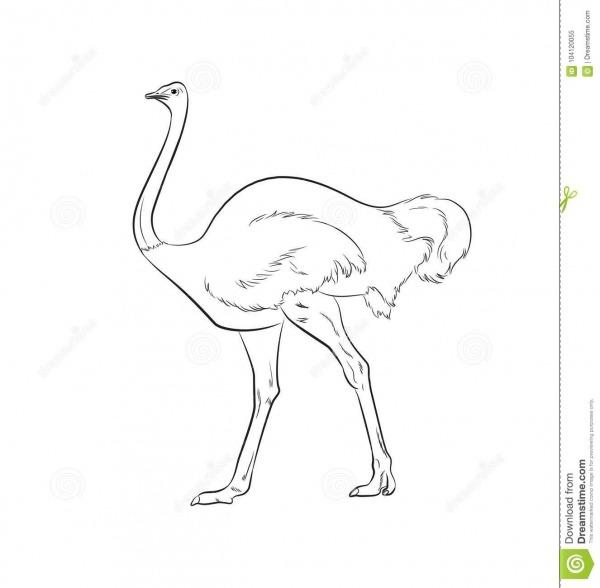 Ilustração Do Vetor Do Desenho Da Avestruz Ilustração Do Vetor