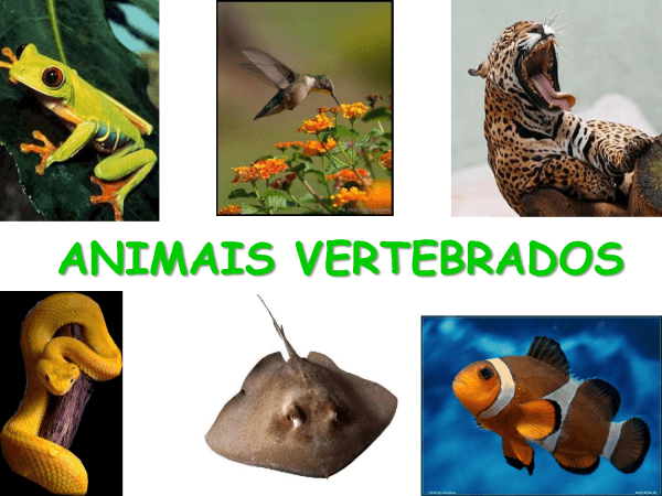 Tudo Sobre Biologia  Animal Vertebrado
