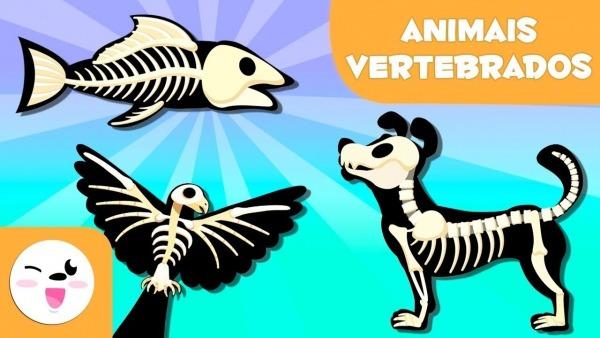Animais Vertebrados Para Crianças