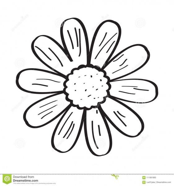 Desenho De Uma Flor Ilustração Do Vetor  Ilustração De Gráfico