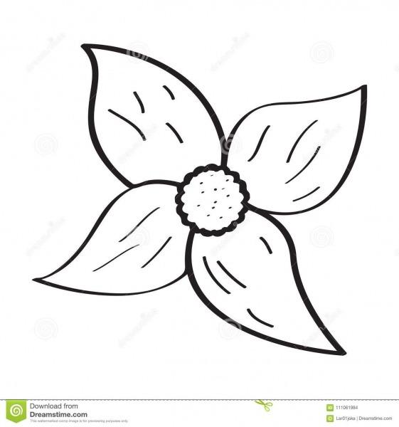 Desenho De Uma Flor Ilustração Do Vetor  Ilustração De Naughty