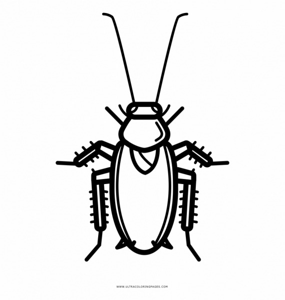 Hd Roach Drawing Black And White