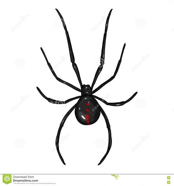 Aranha Da Viúva Negra Dos Desenhos Animados Do Vetor Ilustração