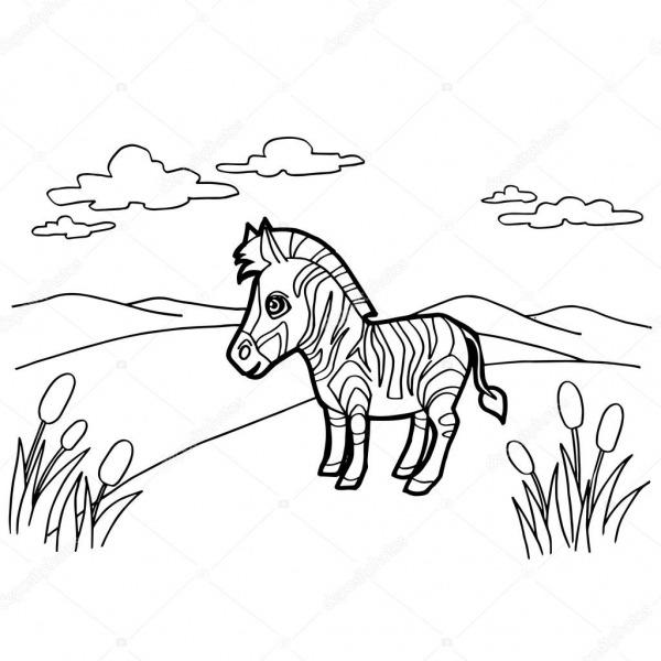 Desenho De Zebra Colorir Vetor De Páginas — Vetores De Stock