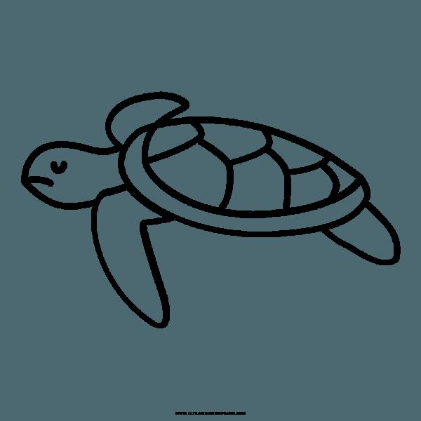 Tartaruga Marinha Desenho Para Colorir – Coloring City