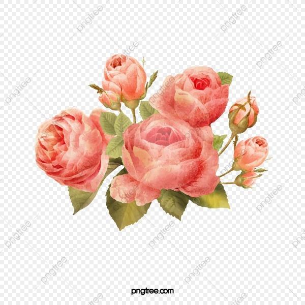 Moldura Flores Rosas Flores Lindas Flores Material Material