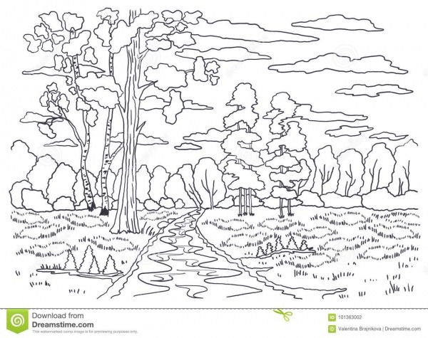 Molde Para Colorir Pintura De Paisagem Floresta, árvores, Vidoeiro