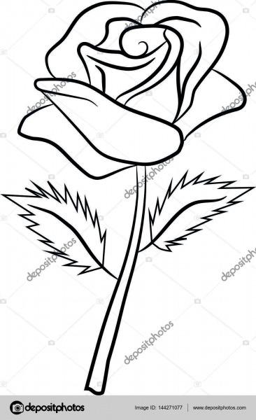 Rosa, Flor, Padrão, Pétalas, Folhas, Desenhar, Pintar — Vetores De