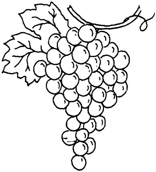 Desenhos De Uva Para Colorir E Imprimir