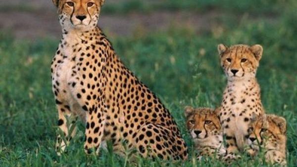 Fotos De Animais Selvagens Para Imprimir