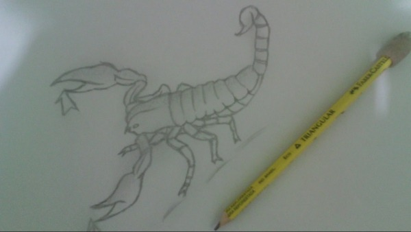 Desenhando Escorpião  Drawing Scorpion !!!