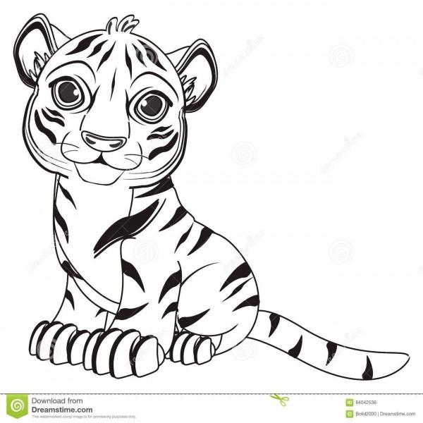 O Tigre Da Coloração Senta