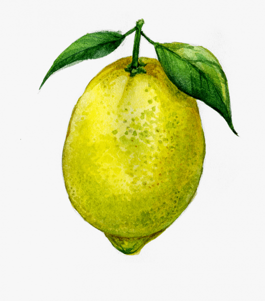 Juice Lemon Fruit Transprent Png Free Download