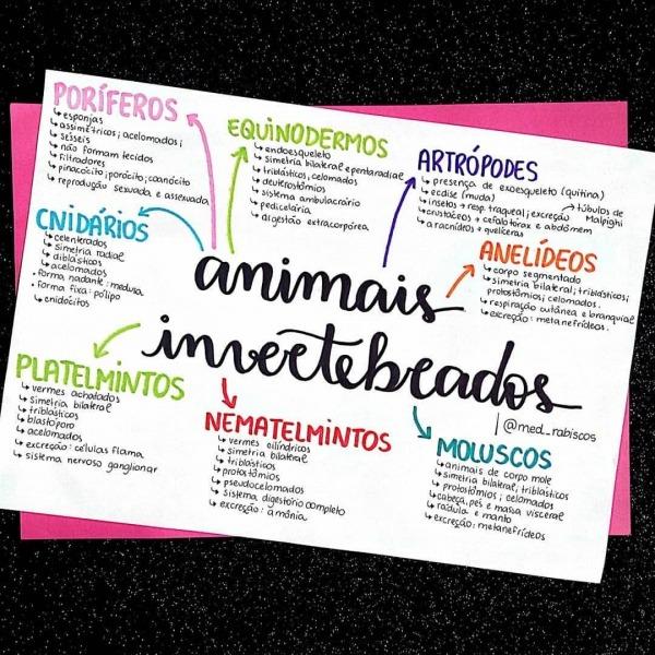 🔹◾resumo De Biologia Sobre Animais Invertebrados        Até