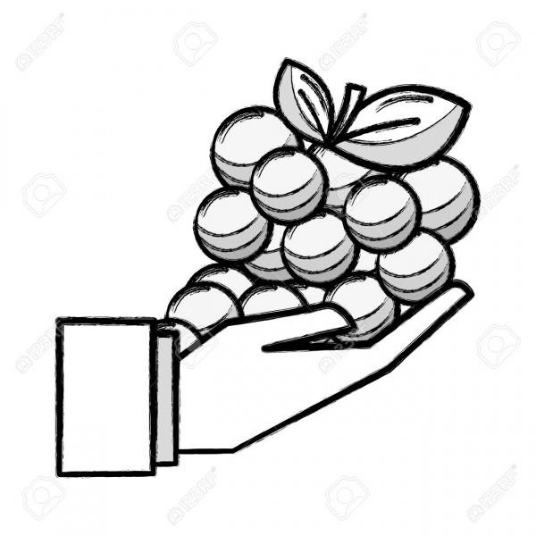 Figura Fruto De Uva Orgánica En El Icono De Mano Ilustraciones