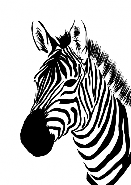 Zebra Face Pictures