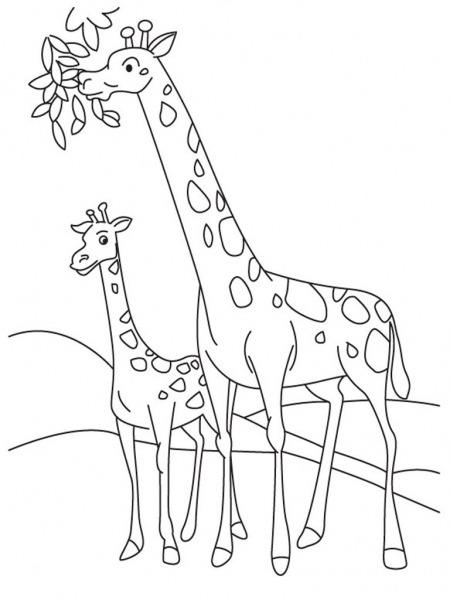Desenhos Para Colorir De Animais Girafa