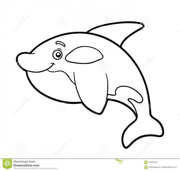 Livro Para Colorir, Página Colorindo (baleia De Assassino