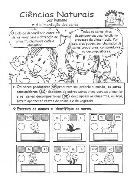 Atividades E Desenhos  Cadeia Alimentar
