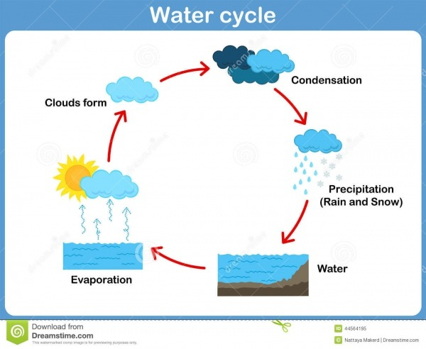 Ciclo Del Vector Del Agua Para Los Niños Ilustración Del Vector