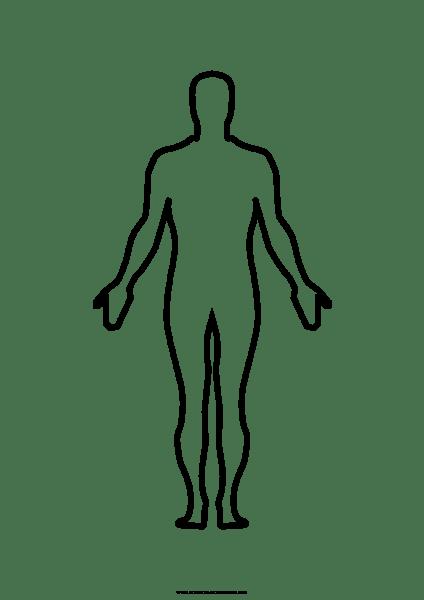 Corpo Humano Desenho Png » Png Image