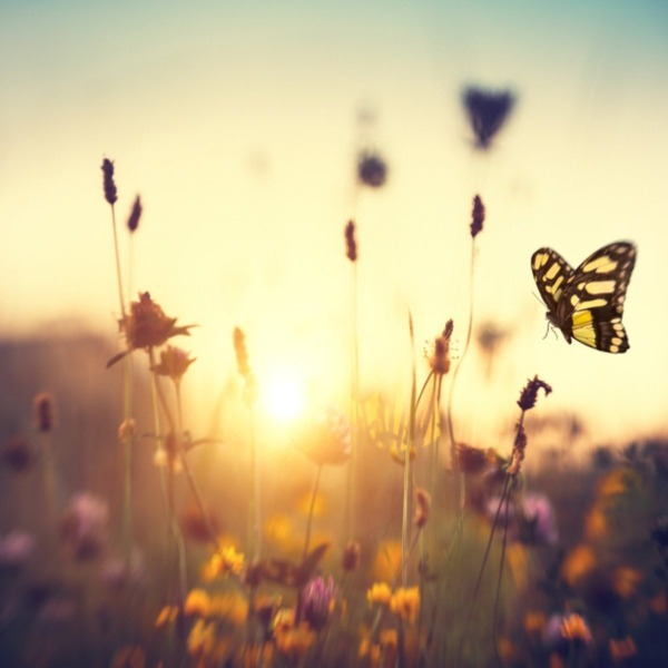 Mudança Climática  Flores E Borboletas Já Não Surgem Juntas