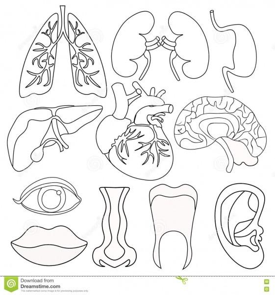 Desenhos Para Colorir Corpo Humano Infantil