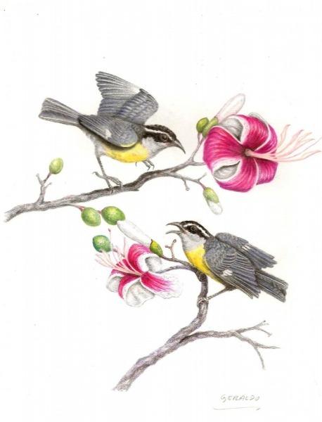 Observar E Desenhar As Aves De Piracicaba