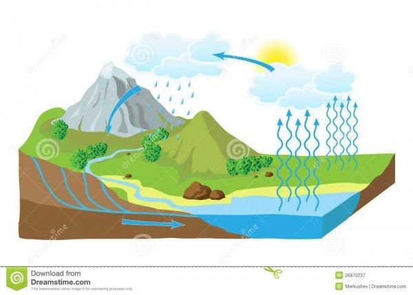 Vector El Esquema Del Ciclo Del Agua En Naturaleza Ilustración Del