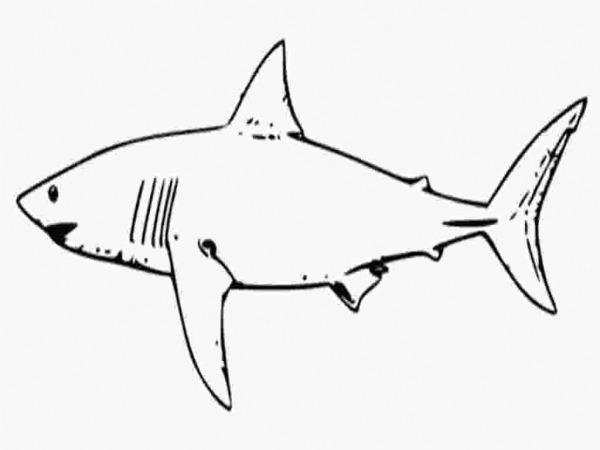 Shark Color Pages Free Printable Shark Coloring Pages For Kids