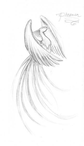 Phoenix By ~kamiruchan015 On Deviantart I'm Looking For Something