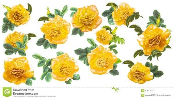 Cena Dos Desenhos Animados Com As Flores Bonitas E Coloridas No