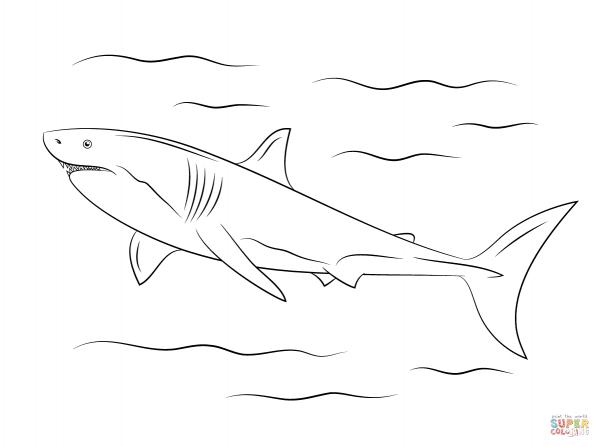 Desenho De Grande Tubarão