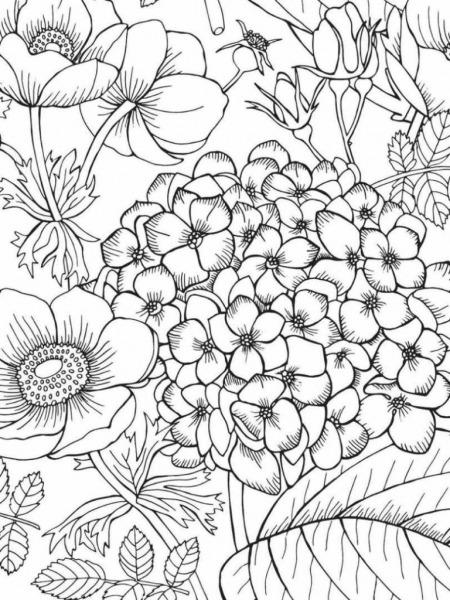 Flores Desenhos