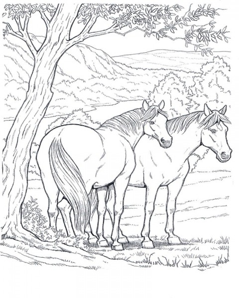 Horses_4 Adult Coloring Pages