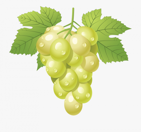 Grapes Grape Art On Vines Clip Free And 2 Cliparts