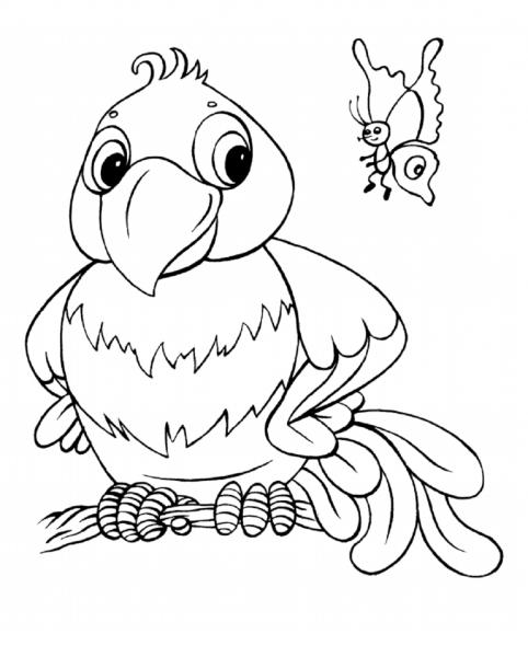 Desenhos De Papagaio E Borboleta Para Colorir E Imprimir